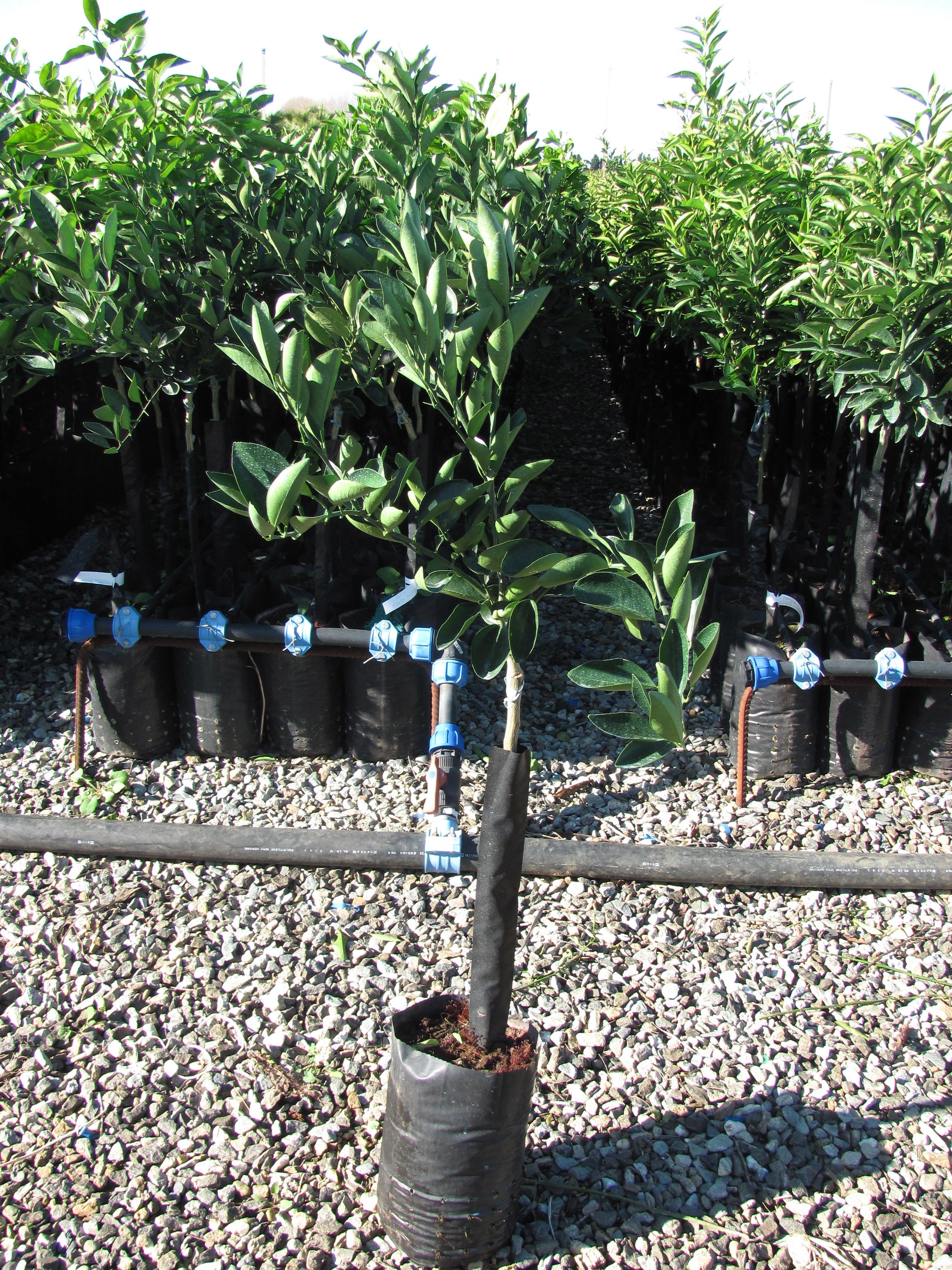 Vivaio alberi da giardino - Vendita alberi da giardino ...